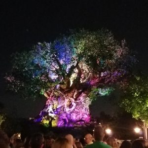 Tree of Life Awakens at the Animal Kingdom