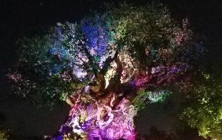 Tree of Life Awakens at the Animal Kingdom