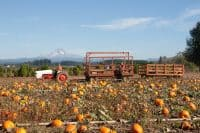 Bushue's Pumpkin Patch Boring Oregon