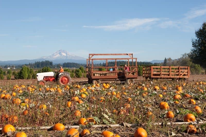 Bushue's Pumpkin Patch Boring Oregon