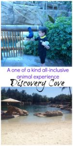 Discovery Cove in Orlando is one of the coolest day resorts with all-inclusive experiences with close up animal encounters.