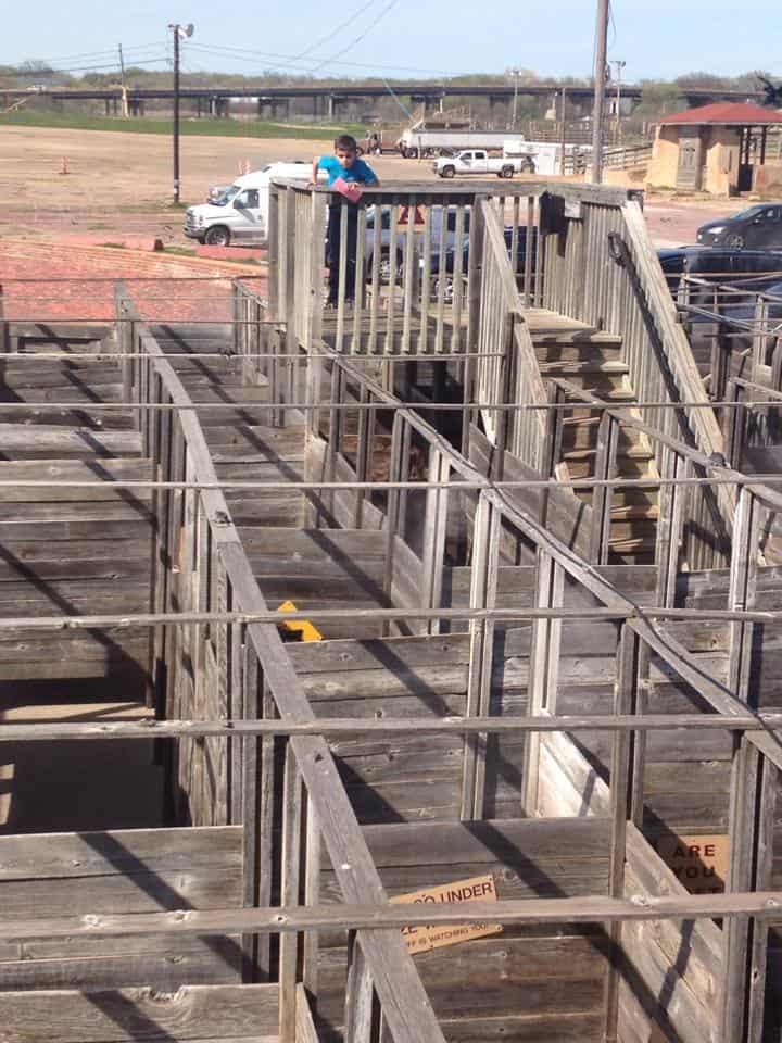 Cowtown Cattle-pen Maze