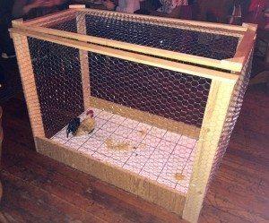 chicken shit bingo at River Pig Saloon