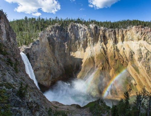 7 Reasons to Explore Yellowstone National Park