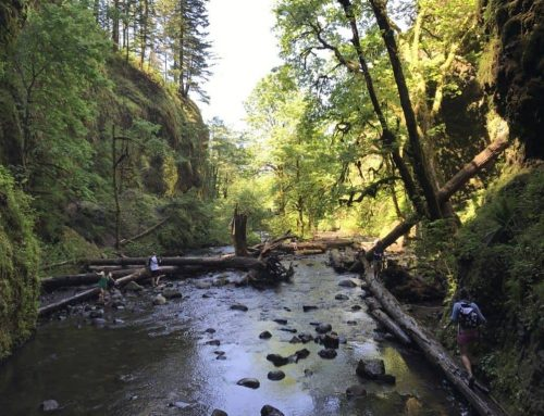 Oneonta Gorge Hike in Oregon