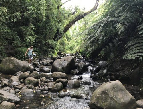 We Hiked Maunawili Falls in Oahu, Hawaii and Lived to Tell About It!