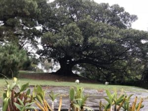 Royoal Botanical Garden in Sydney is free