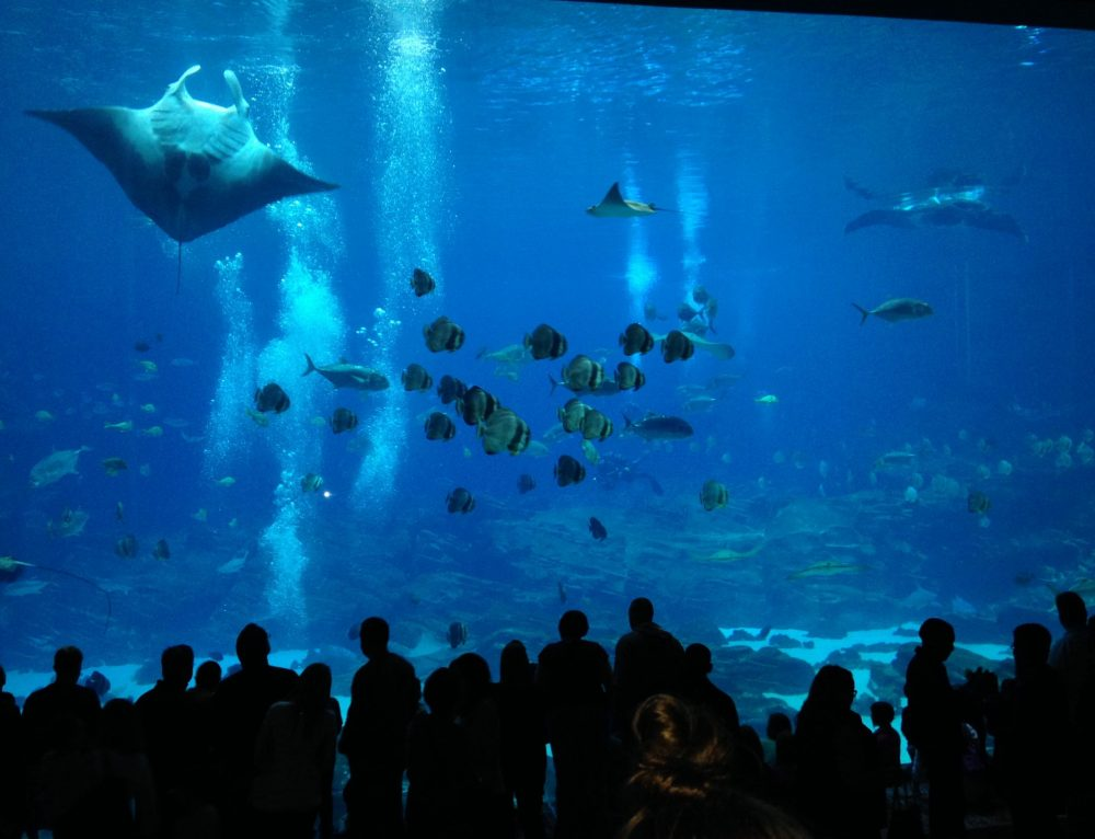 Georgia Aquarium – Atlanta, Georgia