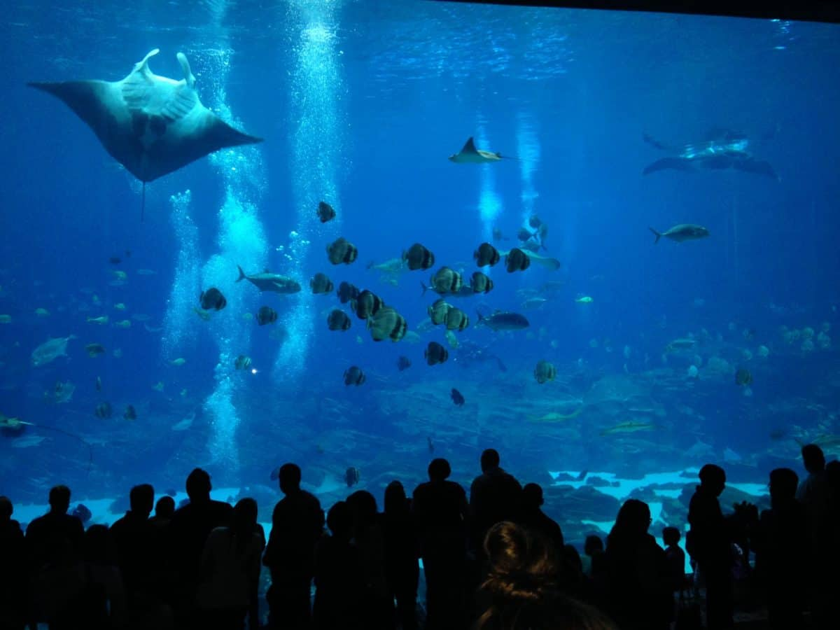 Marine biologists, in charting earth's last uncharted frontier, often deal with outlaw otters and saloon brawls between pool sharks. Enter a tamer teeming of life with today's Groupon, which gets you tickets to Oregon Coast Aquarium, located in kampmataga.ga between two options:Price: $