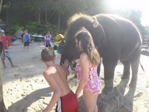 Elephants on the beach in Phuket
