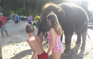 Elephants on the beach in Phuket