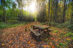 How to plan a meaningful fall picnic
