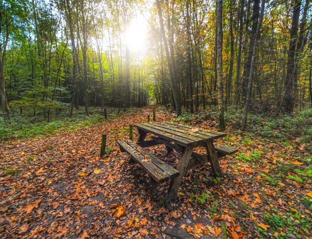 Fall Foliage Scavenger Hunt and Picnic