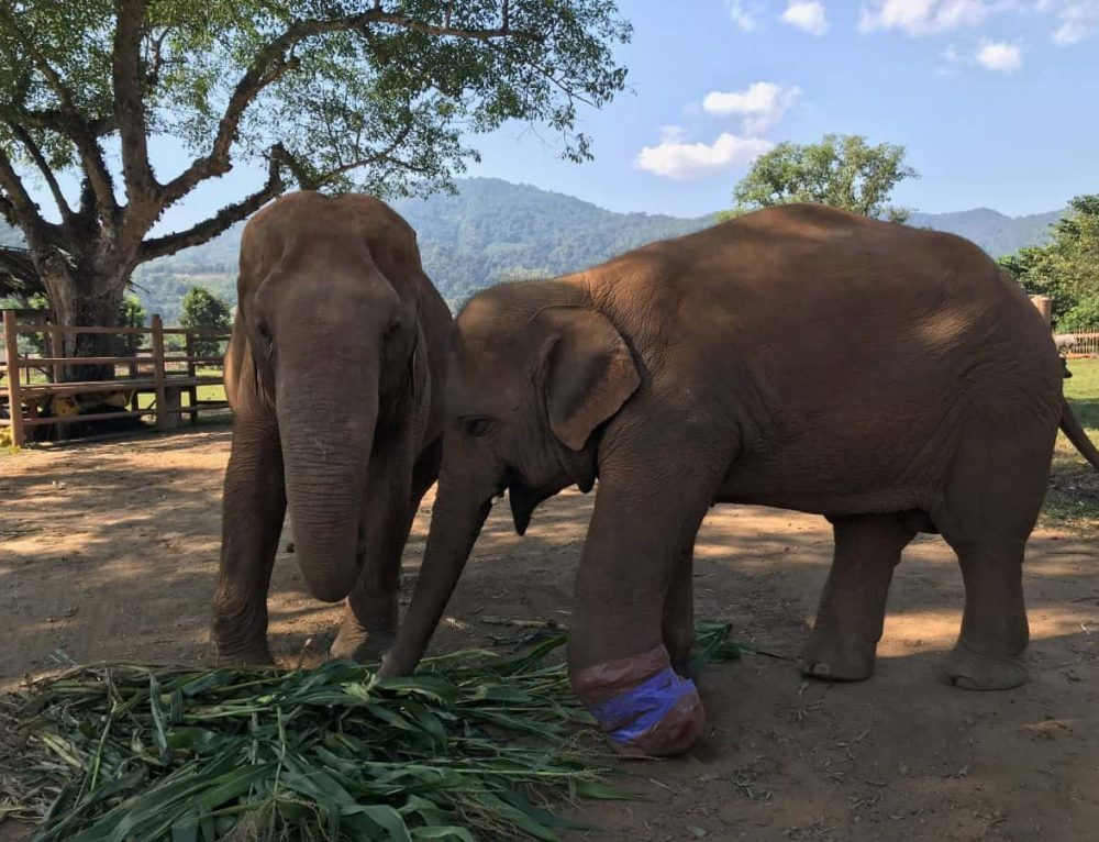 Visiting a Chiang Mai Elephant Sanctuary