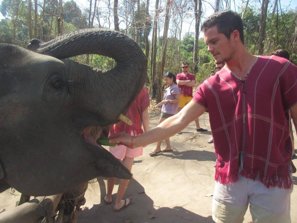 Feeding elephants at the elephant sanctuary