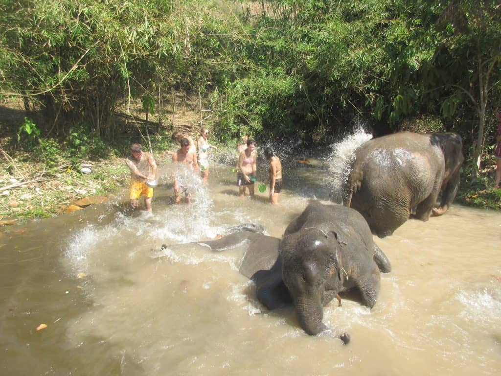 Into The Wild Elephant Camp an elephant sanctuary in Chaing Mai, Thailand