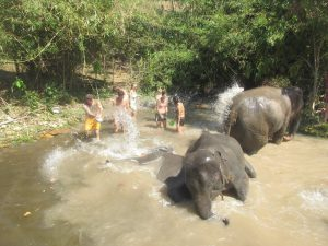 Into The Wild Elephant Camp an elephant sanctuary in Chiang Mai, Thailand