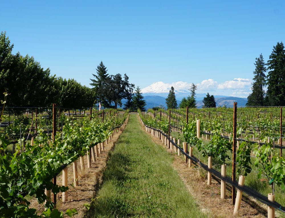 8 Kid Friendly Wineries in Hood River