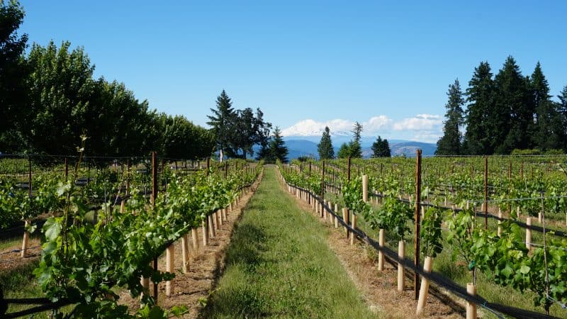 Kid Friendly Wineries in Hood River
