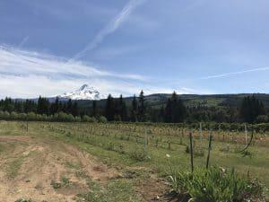 Grateful Vineyards