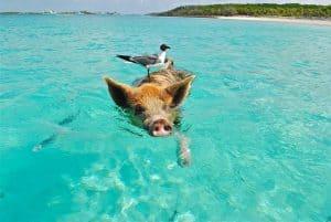 Staniel Cay in the Bahamas