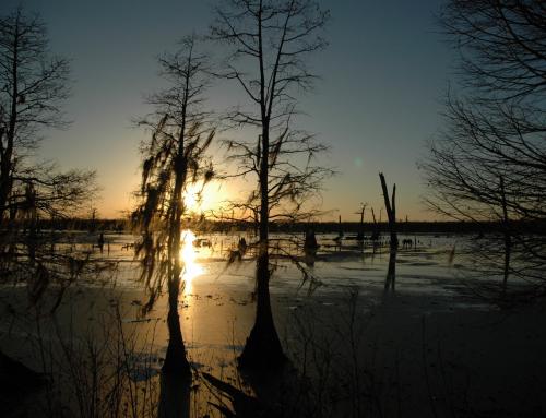 A Melting pot of Culture – Exploring Louisiana