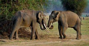 Elephants in Kabini