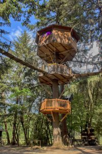 Out N About Treehouse Resort