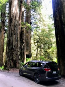 Take a Pacifica mini van down Howland hill road in the Redwood National Forest