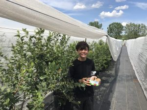 Berry picking in Laval