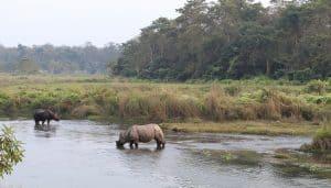 Rhinos at Chitwan National Park