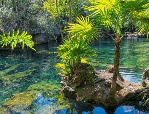 Top 24 Cenotes Near Cancun