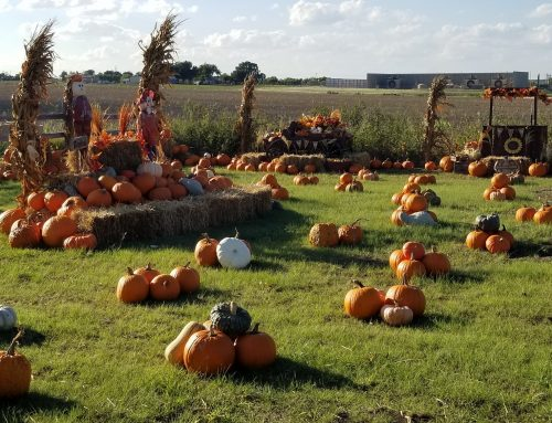 Dallas – Fort Worth Pumpkin Patches