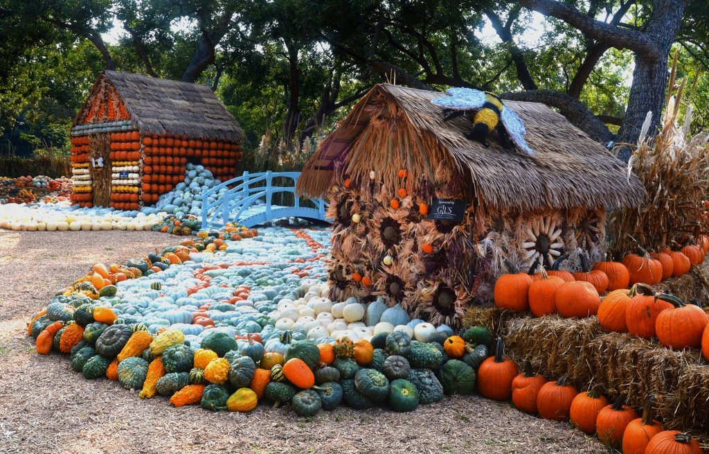 Dallas Arboretum and Botanical Garden pumpkin patch
