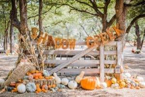Shadow Creek pumpkin patch in Midlothian