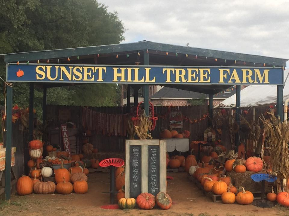 Sunset Hill Tree Farm Pumpkin Patch
