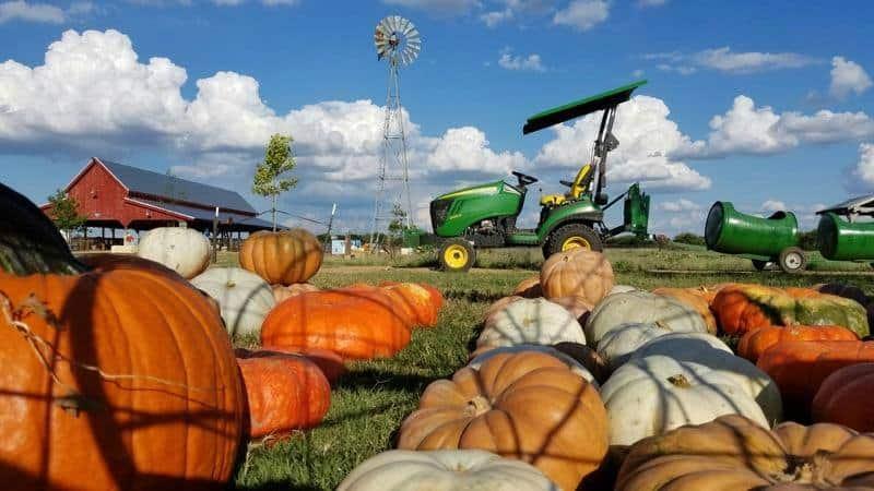 The Big Orange Pumpkin Farm at Preston Trail Farms