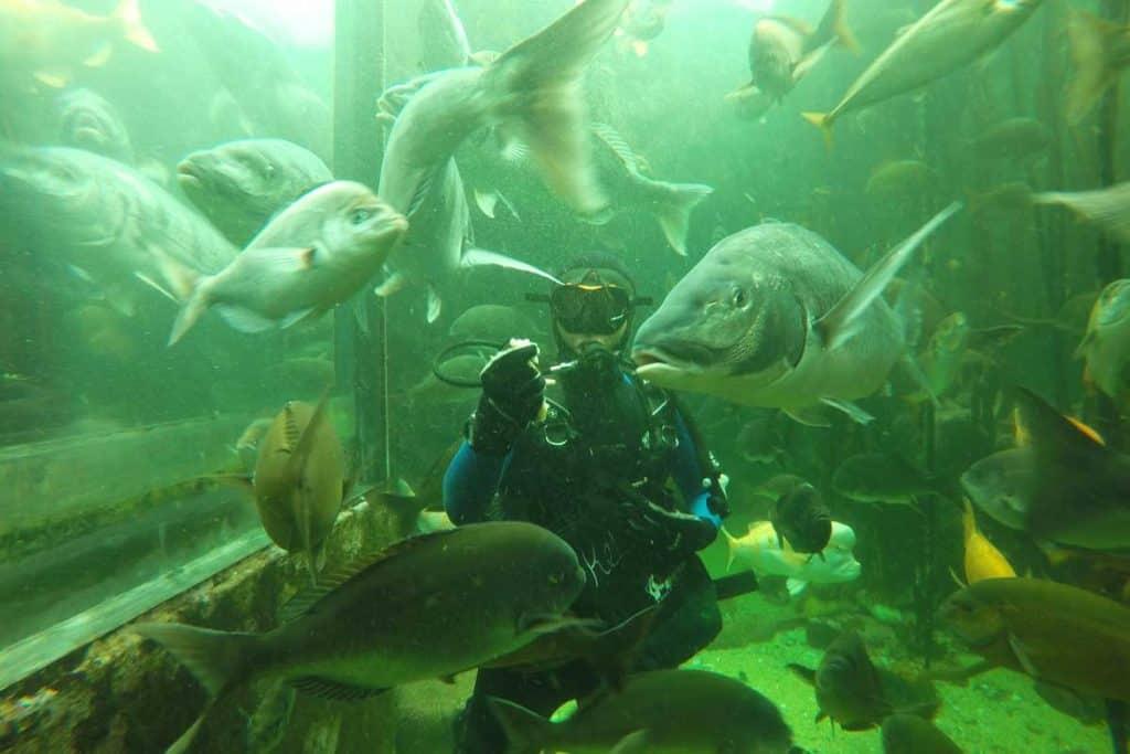 two-ocean-aquarium