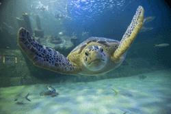 Aquarium at Pine Knoll Shores