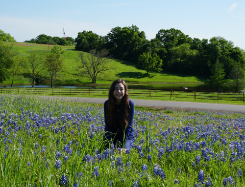 Where to Find Texas Bluebonnets