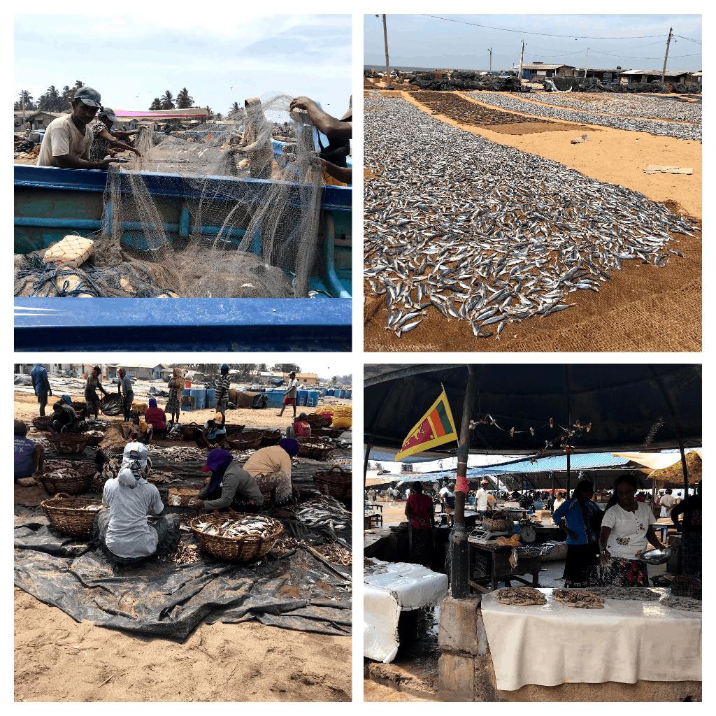 Fish Market in Negombo
