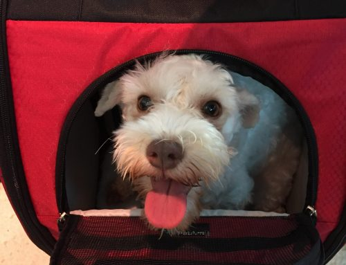 Traveling With Pets: 5 Tips To Reduce Travel Stress And Anxiety